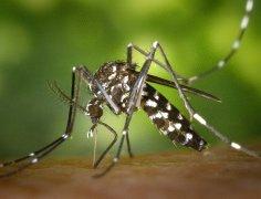 Piqûre de moustique tigre : comment se protéger efficacement ?