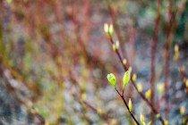 Santarome Bio : la gamme minceur aux bourgeons de plantes